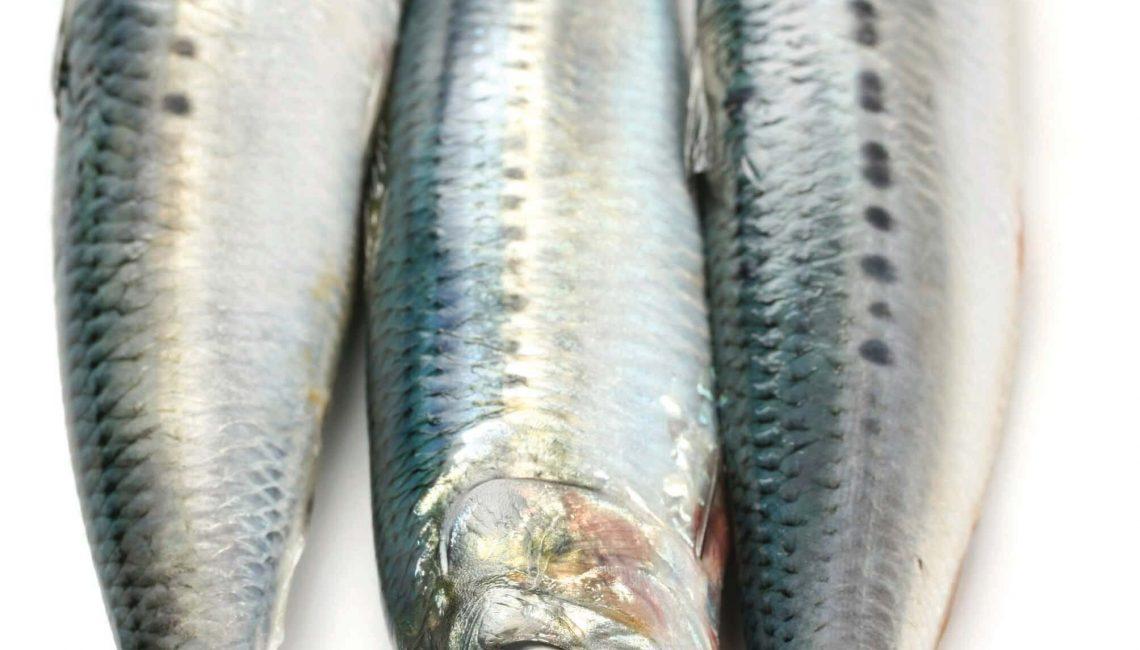 Peixes Gordos